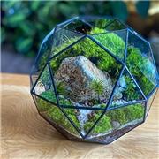 Venus Deco Geometric Moss Terrarium